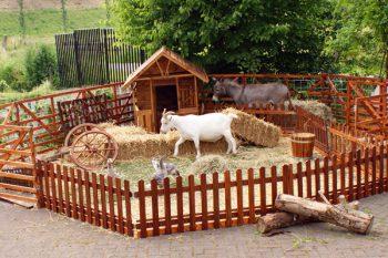 Mobiele Kinderboerderij
