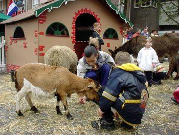 Mobiele Kinderboerderij GOLD