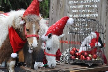 Christmas Pony World