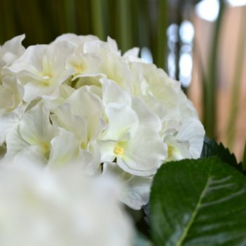 Hortensia | Hoogglans zwart